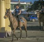 Police Horses - Eastern