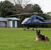 Police Dog and Chopper - Auckland