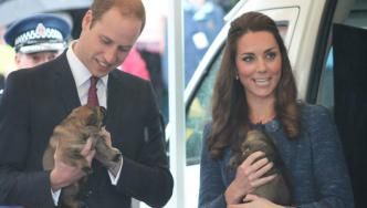 Duke and Duchess of Cambridge holding two Police dog puppies.