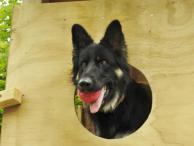 Trentham Police Dog Training Centre dog fort