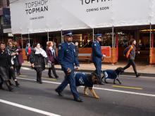 The dogs charmed the spectators.