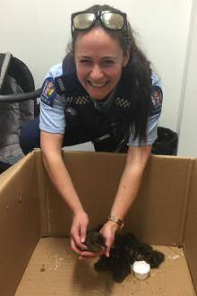 Constable Sophie Gannon with the abandoned ducklings.
