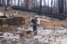 Constable (now Sergeant) Nick Prince and Sabre at work amid the devastation of 2009.