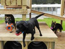 Trentham Police Dog Training Centre dog fort