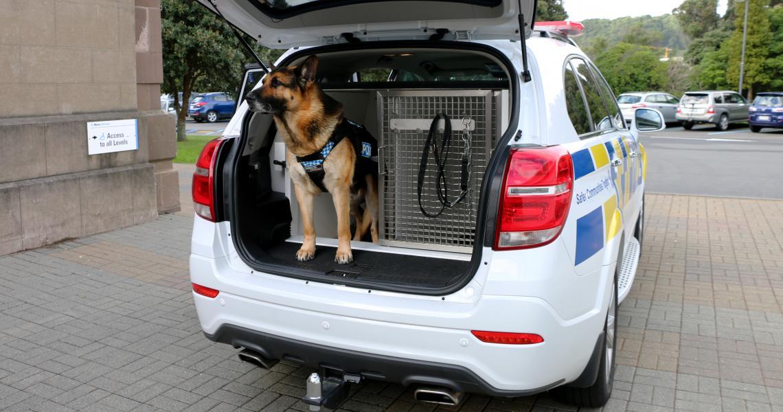 Ike in dog van