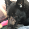 The Police dog injured in the incident near Tangowahine on Tuesday is making good progress.