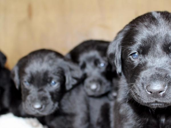 The pups at around four weeks old.