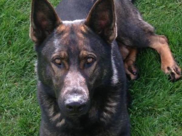 Police dog Thames