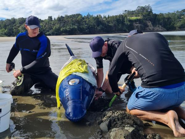 The team putting survival techniques into practice on a 200kg water-filled inflatable dolphin.