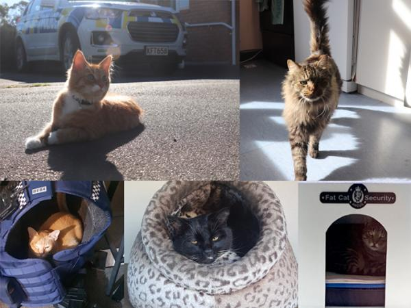 Cats of New Zealand Police Stations