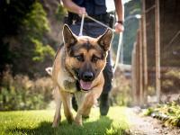 Operational dog - day